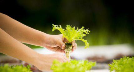 Дания создает сеть для вертикального земледелия