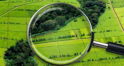 Земли для ведения сельского хозяйства превратились в новый вид инвестиций