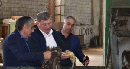 Овечью шерсть из Дагестана готов закупать Китай