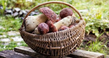 Минприроды: на сбор грибов для собственных нужд ограничений нет
