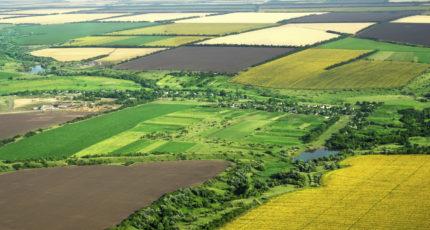 В Краснодарском крае запретили перевод сельхозземель под жилую застройку