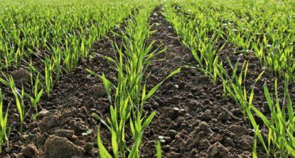 Основные аспекты поддержки посевов озимых культур в условиях затяжной весны