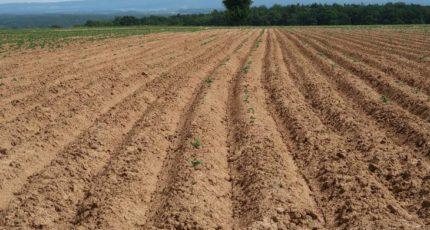 Размышления об органическом земледелии и фуфломицинах для сельхозкультур