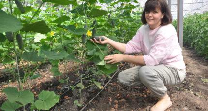 Лискинский район - за пользу чистого продукта