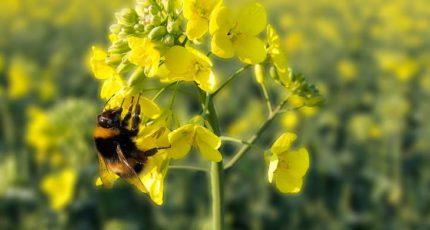 Биопестициды запускают новую зеленую революцию