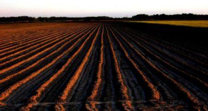Обработка почвы как элемент почвозащитной системы