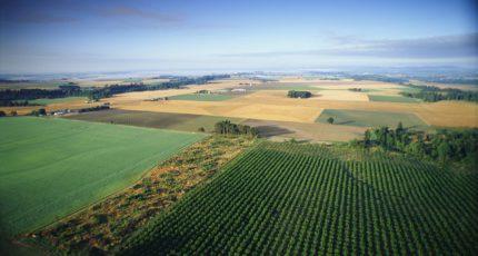 Будущих аграриев приглашают на оплачиваемую практику