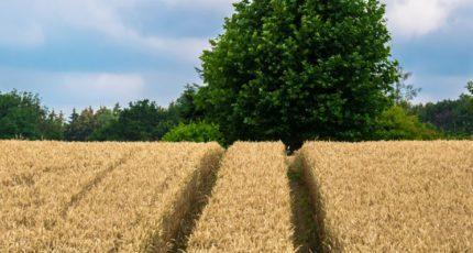 Виктория Абрамченко: рост сельхозпроизводства в 2021 году может составить 5%