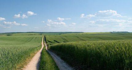 Зрите в корень: исследователи изучили способность сортов пшеницы к перехвату азота