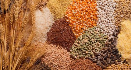 Пшеница и кукуруза дорожают в цене, ячмень – дешевеет