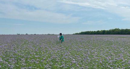 В южных районах Воронежской области стартовала апробация сельскохозяйственных посевов