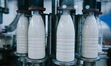 Объём реализации молока в сельхозорганизациях вырос на 1,8%