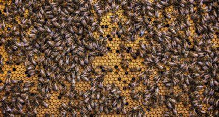 Тайну гибели скота от алколоидов и пчел с зайцами от пестицидов раскрыли при помощи спецтехнологии