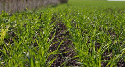 Предложения для сельскохозяйственных товаропроизводителей