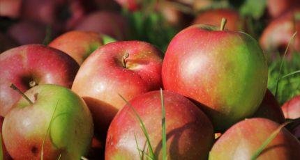 Рекорд вопреки погоде: рынок ждет хороший урожай яблок