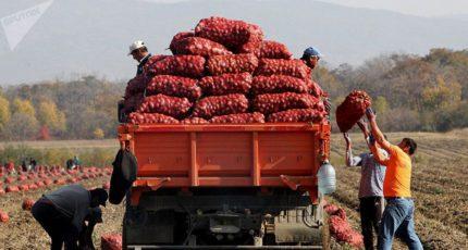 В России некому убирать урожай