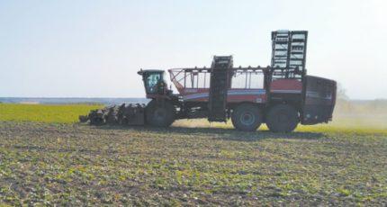 Воробьевский район: Урожайность на полях в районе снизилась