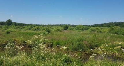 Осушенные болота Центральной России утратили свой сельскохозяйственный потенциал