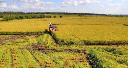 Поддержка мелких фермеров в Китае станет основой развития села