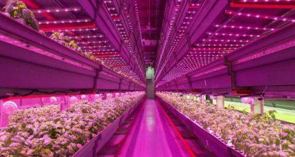 Новая система контейнерного земледелия для выращивания фруктов и овощей без грунта
