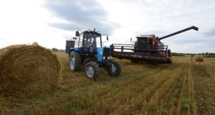 Для органиков в выращивании и заготовке кормов существуют дополнительные риски
