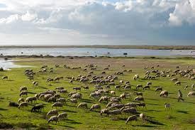 Животноводы Канады и США вынуждены распродавать стада