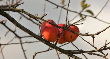 Чем подкормить плодовые деревья осенью – какие секреты есть у азотных и фосфорных удобрений