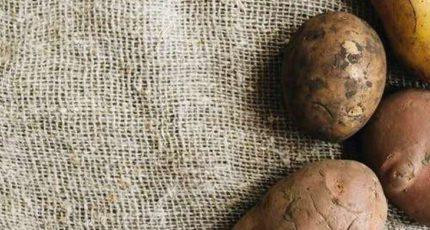 Картофельное поле на балконе