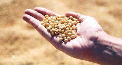 Крупный китайский производитель кормов для КРС построит базу в таможенном парке на границе с Россией