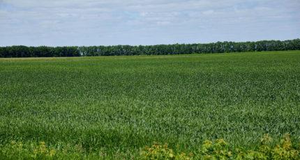 В Воронежской области план посева озимых перевыполнили на 5%