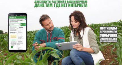 На пути к эко-производству: как приложение для смартфона помогает фермеру