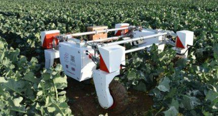 Устаревшее законодательство препятствует использованию роботов в агросекторе