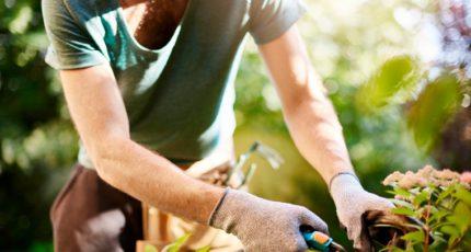 Садоводство в 2022 г. выбрали в качестве приоритетного направления АПК 55 регионов